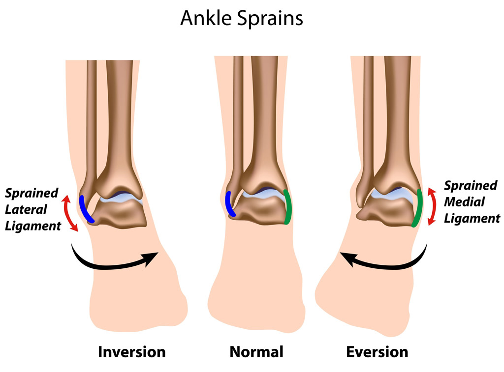 Ankle pictures anatomy